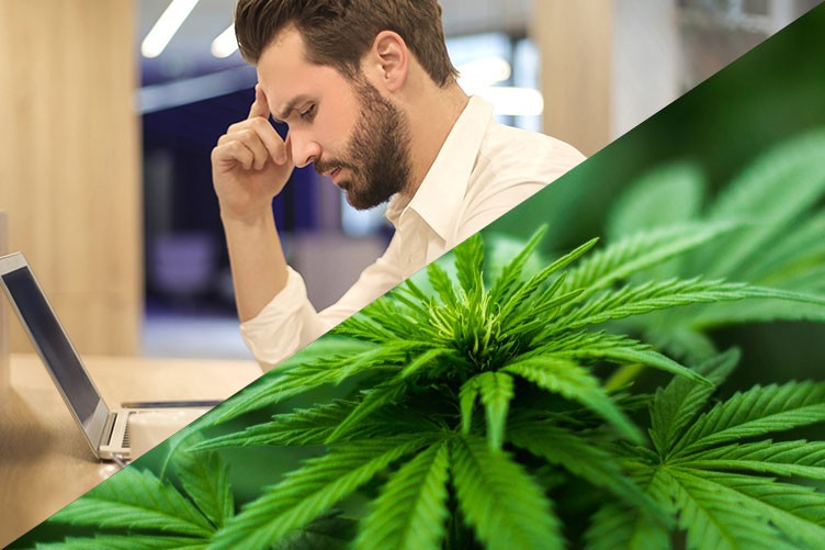 Part 3: How will cannabis legalization affect your business?